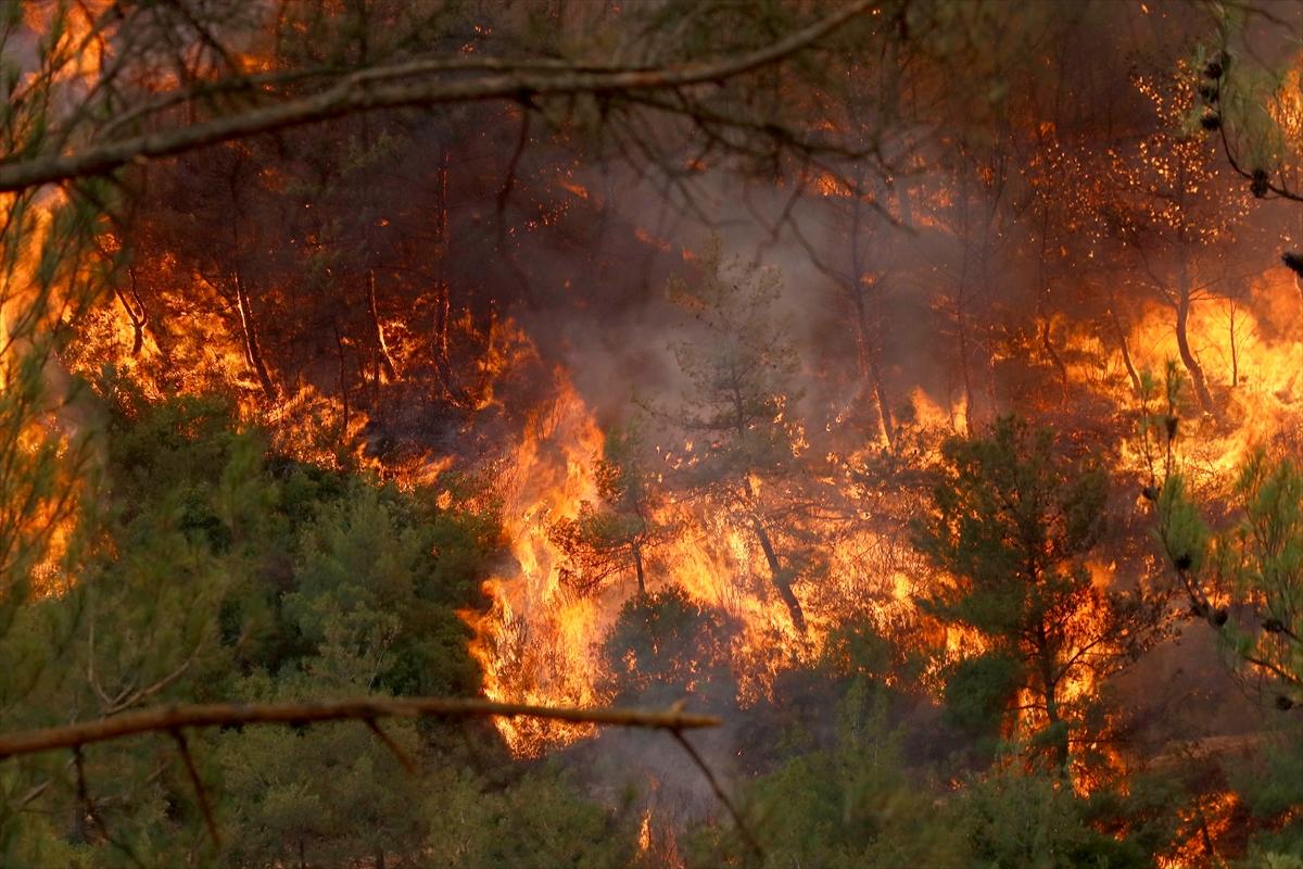 Salamis Kamping Alanı'nda yangın!