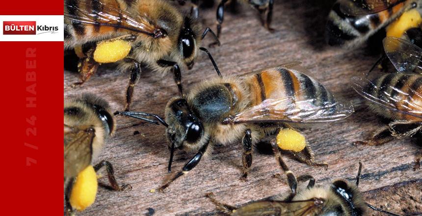 Katil arı operasyonu!