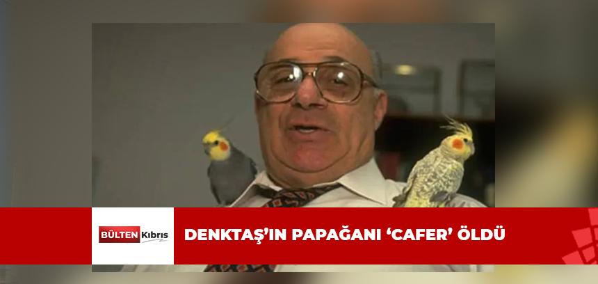 DENKTAŞ'IN PAPAĞANI 'CAFER' ÖLDÜ